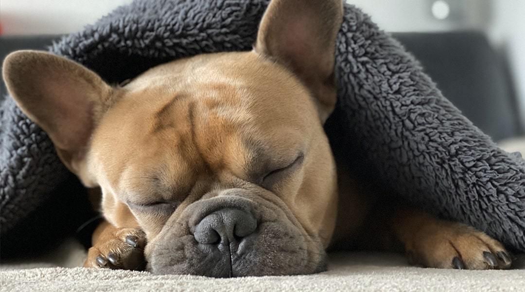globoko spanje